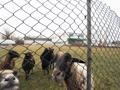 Aussicht ins Grüne mit tierischen Nachbarn