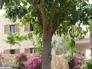 fachada y arbol