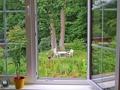 Blick in den Garten im Sommer