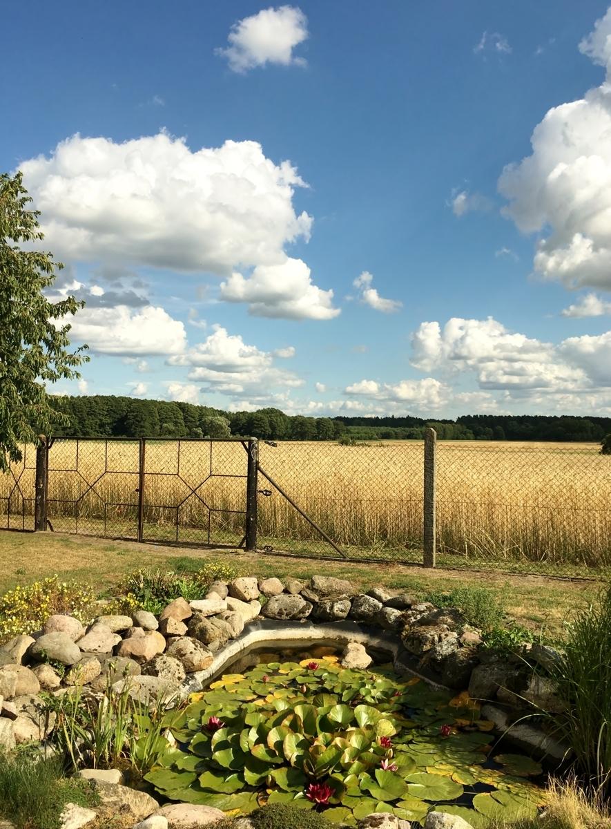 Teich und Feld