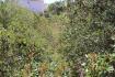 PM07297_Baugrundstueck_Cala-Murada_04