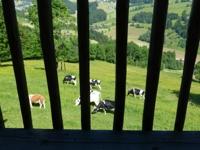 Balkon-Impressionen