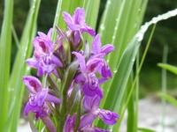 Seltene Orchideen in der Nachbarschaft