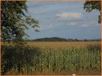 Zu Verkaufen: Landwirtschaftsfläche im Landkreis Barnim
