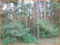 Waldfläche zu Verkaufen -  mit Laub- und Nadelholz