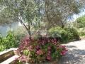 Terrassenbepflanzung
