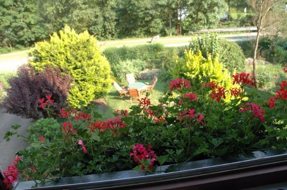 Blick aus dem Fenster OG