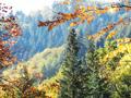 Ausblick in den Wald