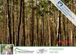Titelbild (Wald)