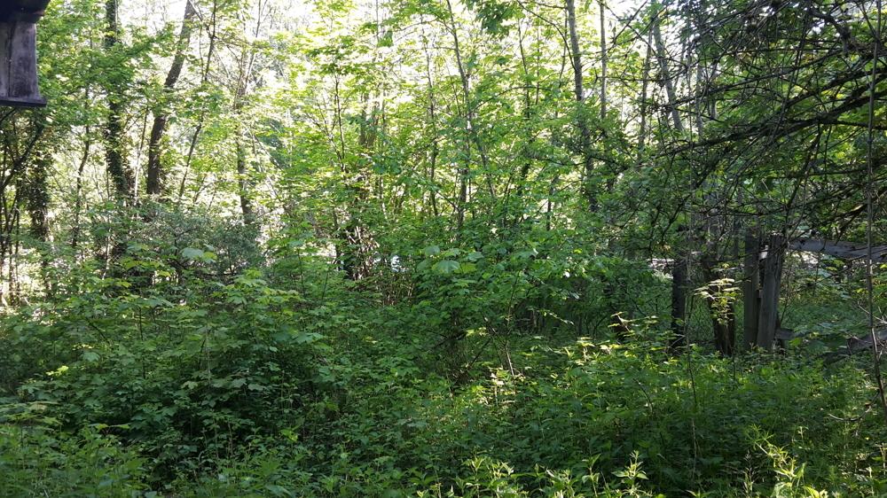 Blick auf das Grundstück Bild 1