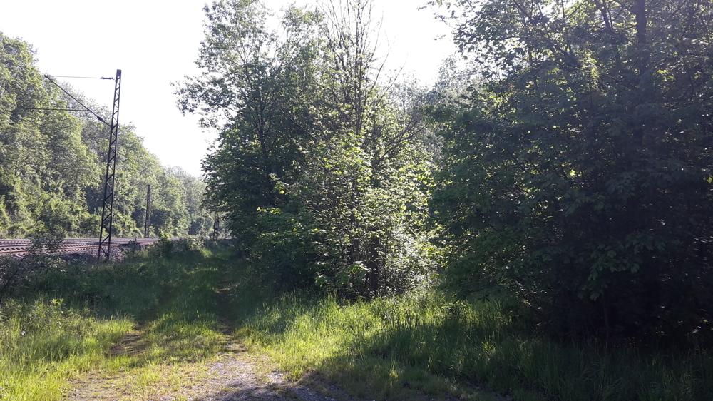 Blick auf das Grundstück Bild 2