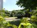 Blick in den Garten1