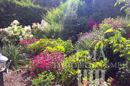 Gartenidylle Sommeraufnahme