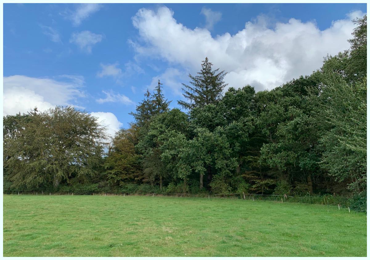 0634 Alter Baumbestand und Weide