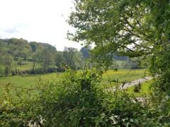 Blick in den Wiesengrund