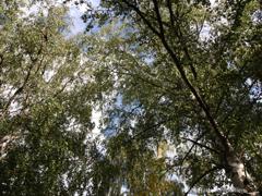 Ihr Birkenhain