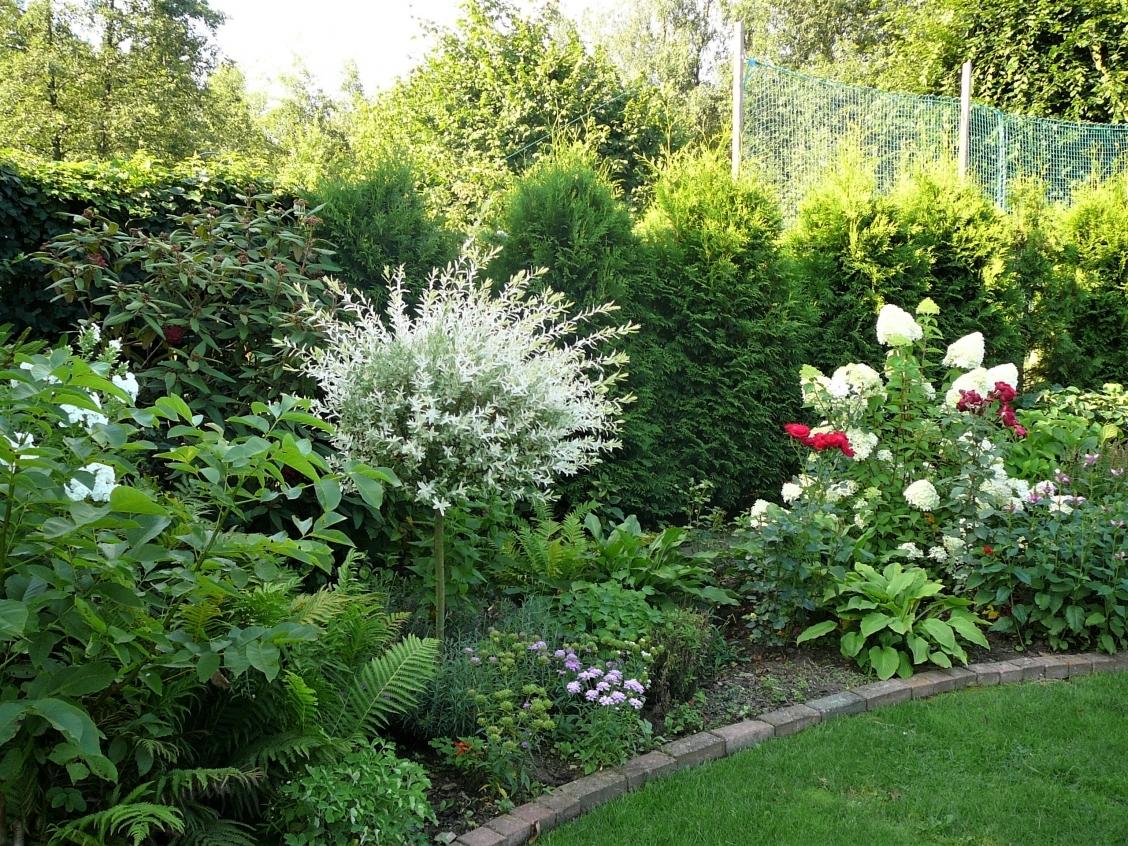 Gartenimpressionen 5