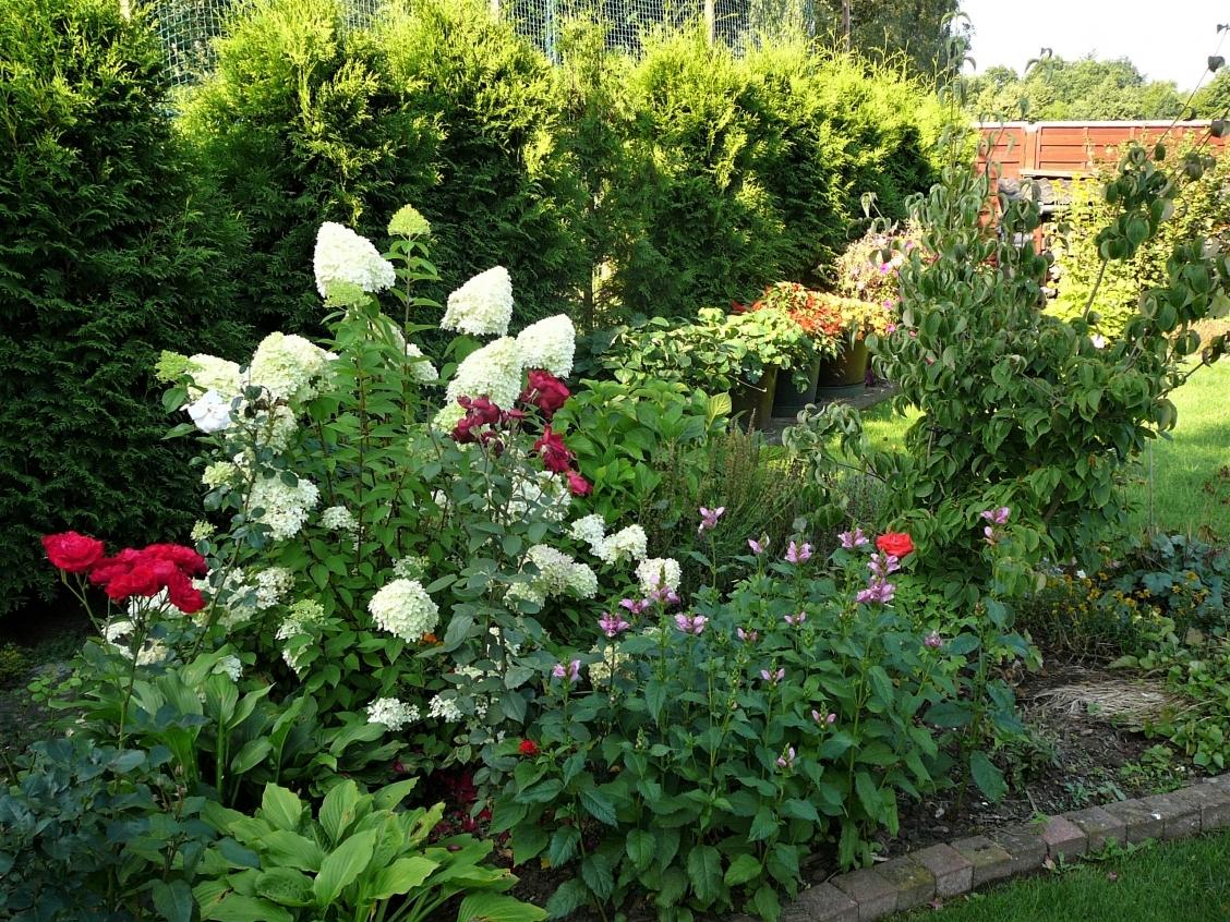 Gartenimpressionen 6