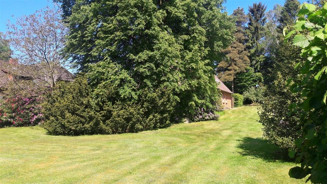 Garten im Sommer 2