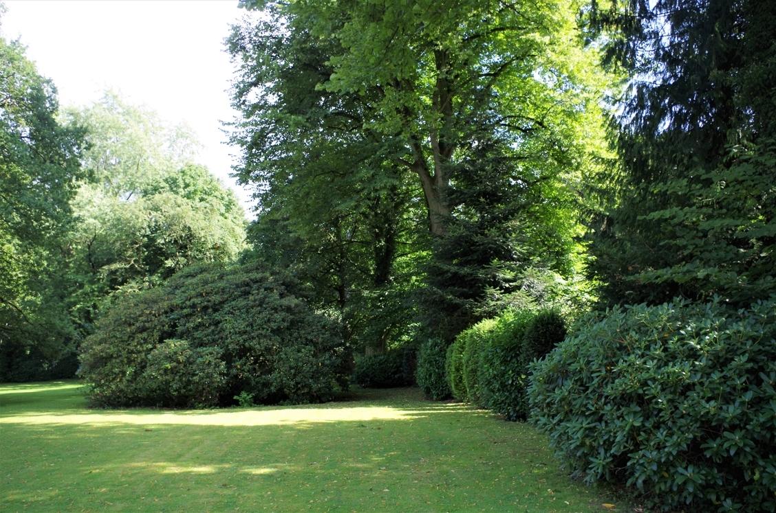 Alte Rhododendren