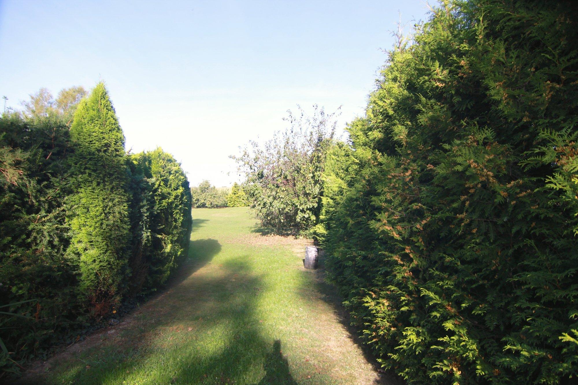 Blick auf Teilbereich des Grundstückes