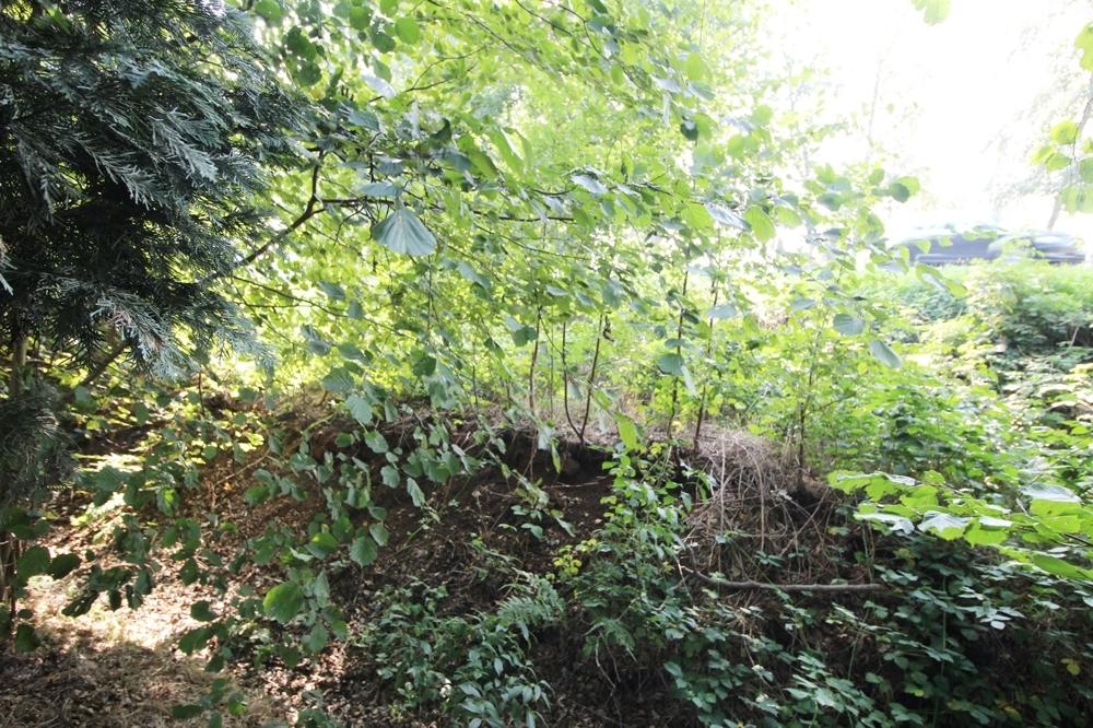 Grünes Grundstück