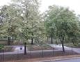 Blick in den Stadtpark