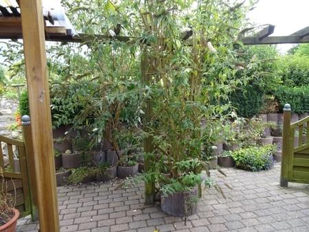 Gartenzimmer mit Terrassenzugang