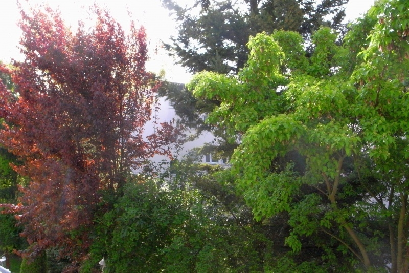 Baumwuchs vor dem Balkon