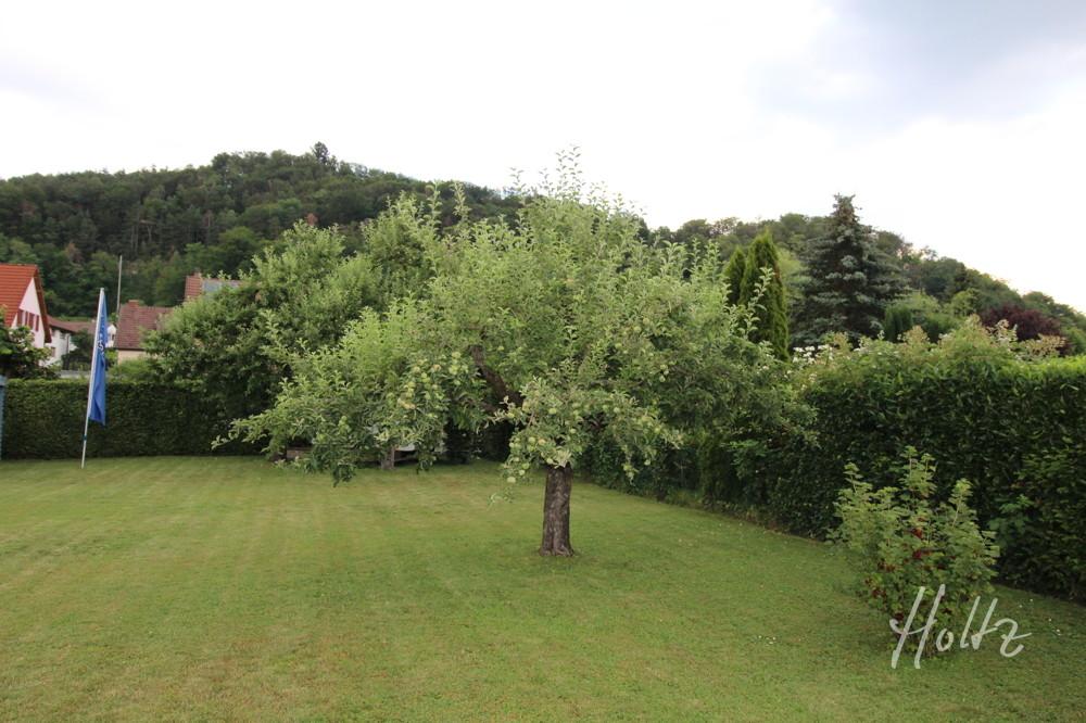 Blick in den Garten 3