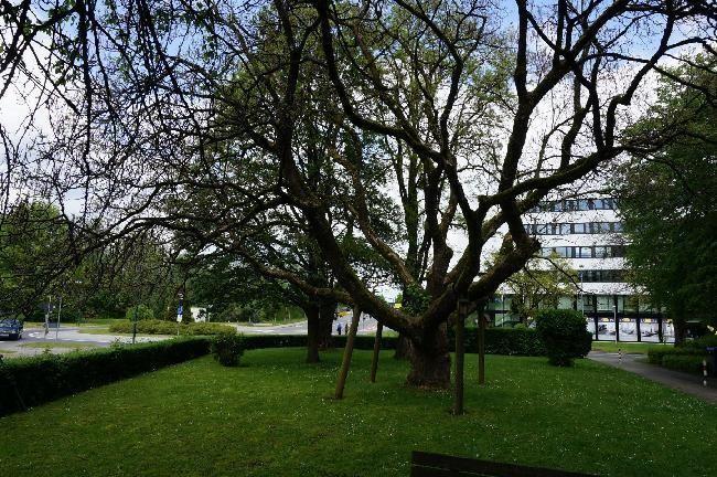 Vorgartenbereich 1.png