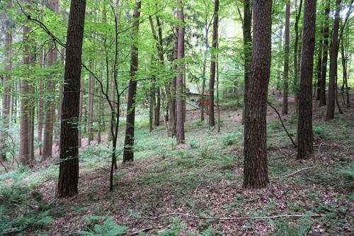 Waldfläche in Plankenfels