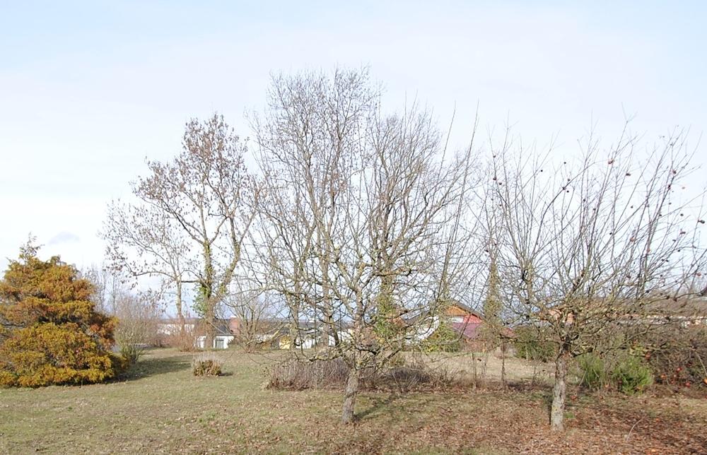 Baumbestand Blick nach Norden