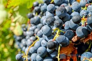 grapes-2719845_1920