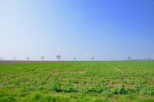 Lage Landwirtschaftsflaeche