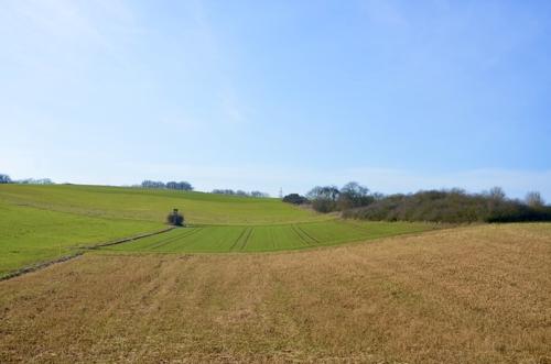 Landwirtschaftsfläche 1