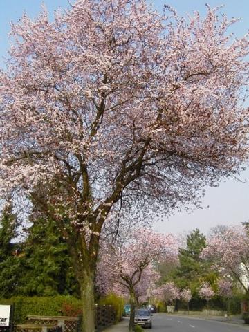 Im Frühjahr eine Pracht