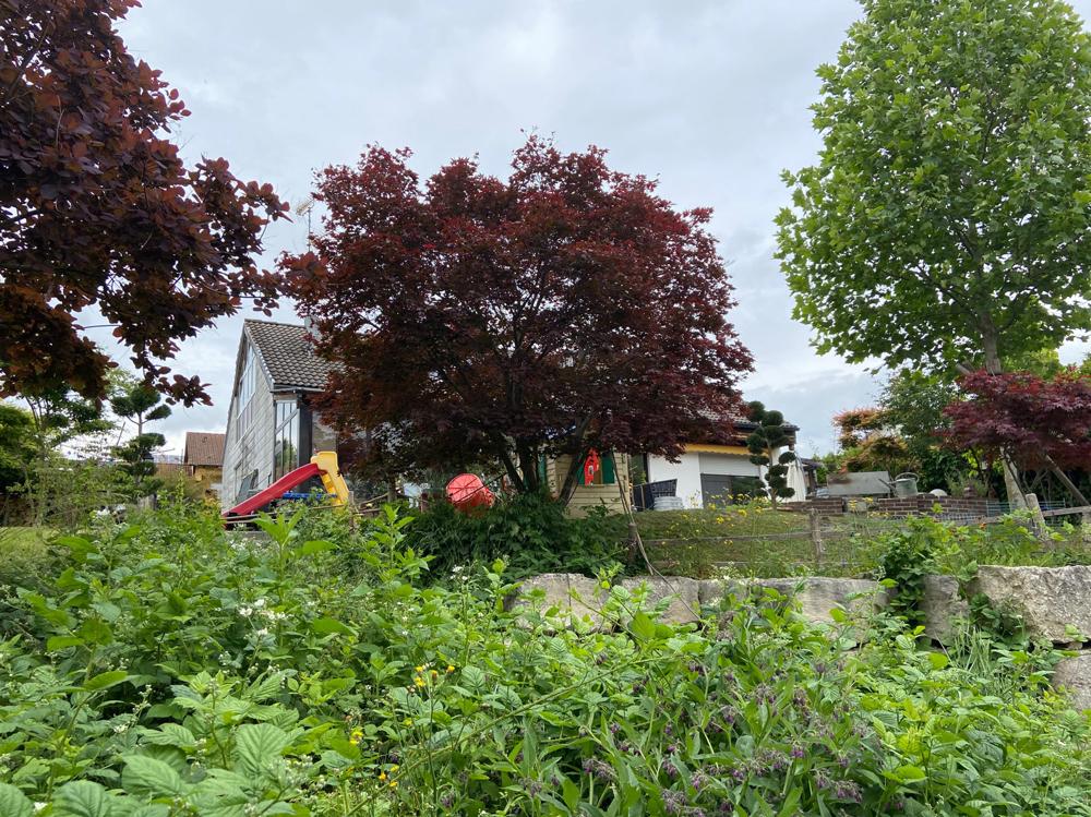Blick auf das Haus (unterer Garten)