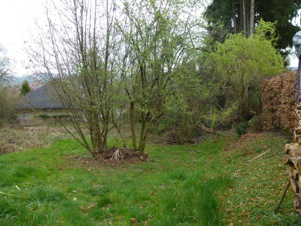 Baum- und Strauchbewuchs