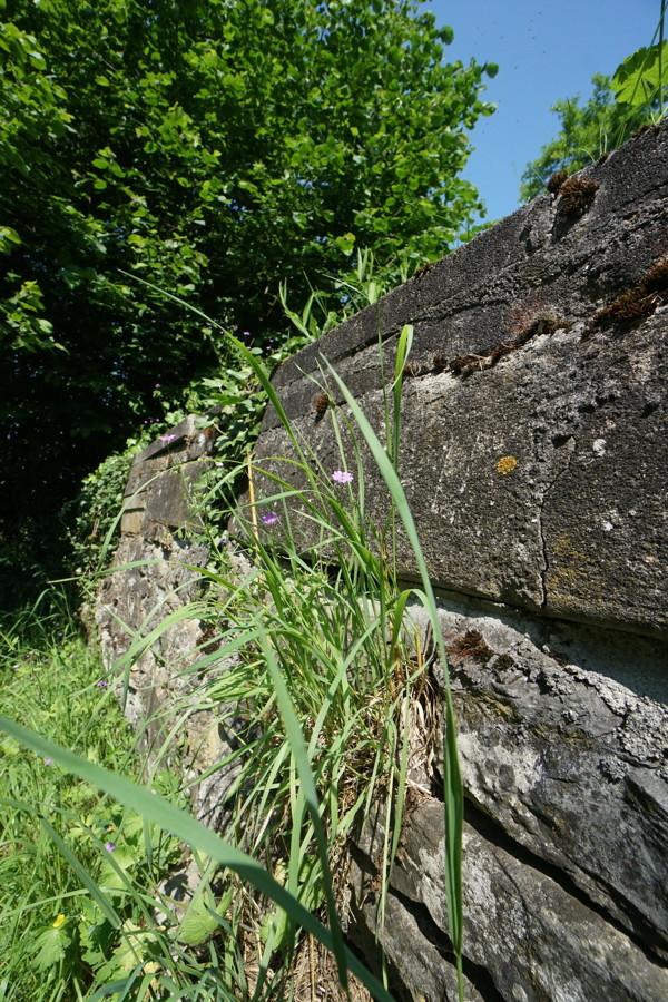 Natursteinmauer Ansicht 1