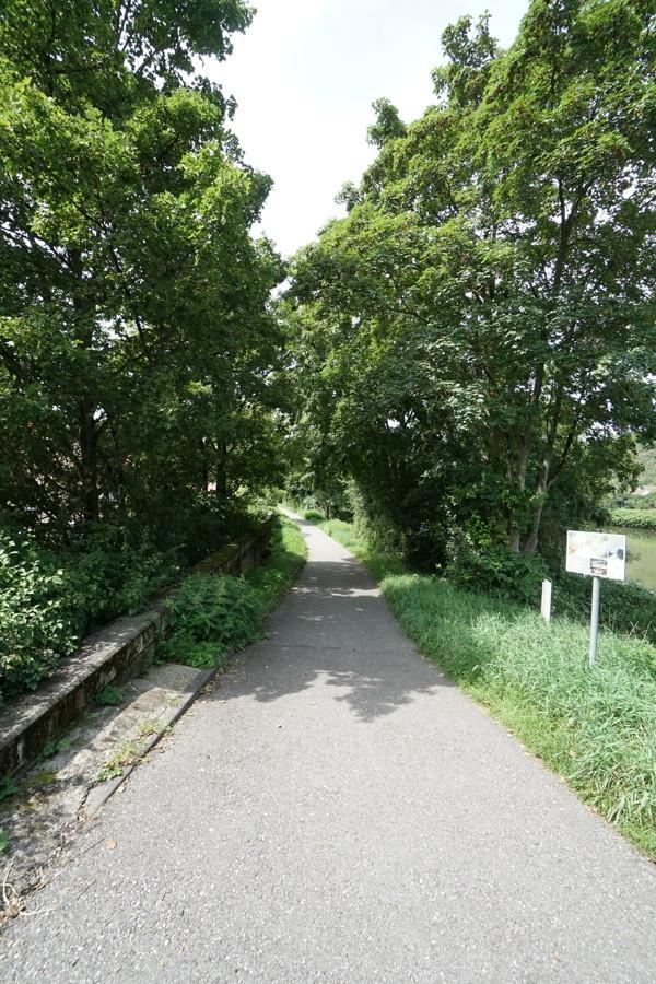 Weg am Neckar entlang 1