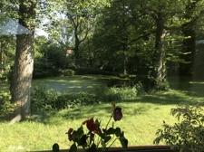 Blick zum Teich
