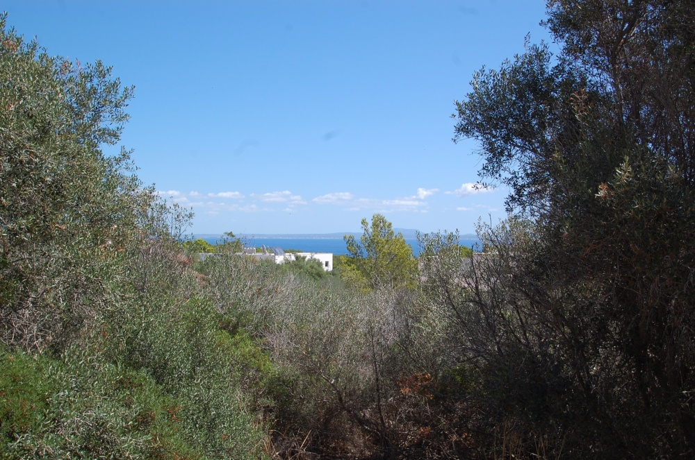 Spacious corner plot in Sol de Mallorca with sea views from the ground floor in one of the most beautiful and exclusive areas of the island. The approx. 1