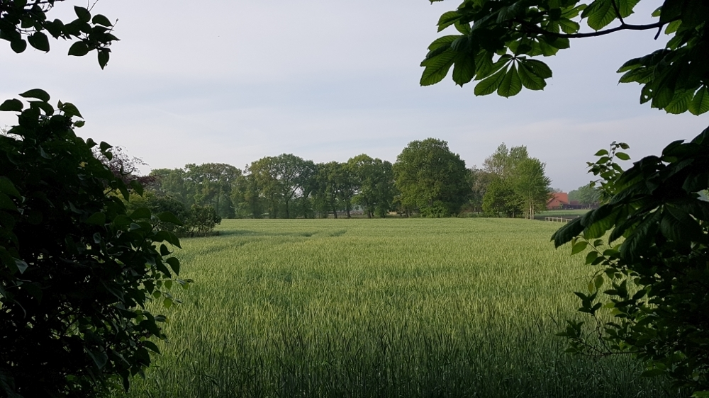 Ausblick Garten