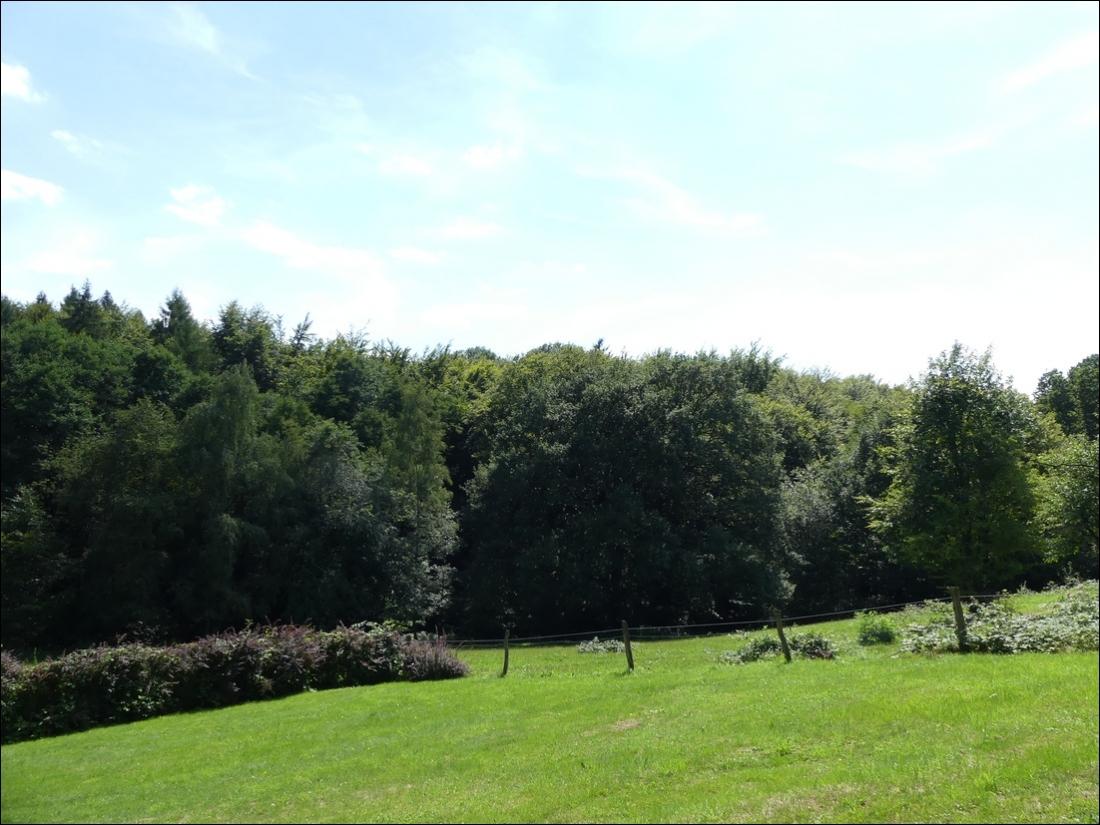Weide und Wald
