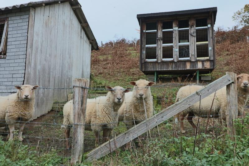 Hobby-Landwirtschaft