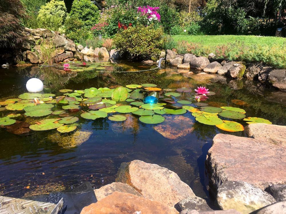 Schöner angelegter Teich