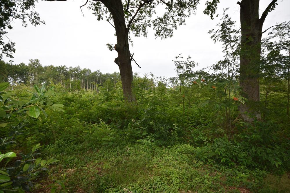 Freier Waldblick hinter dem Garten