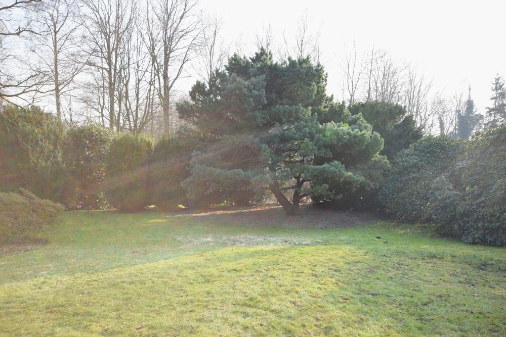 Blick in den Garten 2018