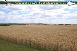 Ansicht3_Weizen